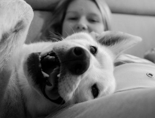 Mães PET são cada vez mais comuns