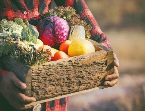 Brasileiros buscam produtos mais saudáveis e sustentáveis
